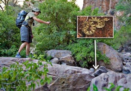 ben-vs-the-rattlesnake
